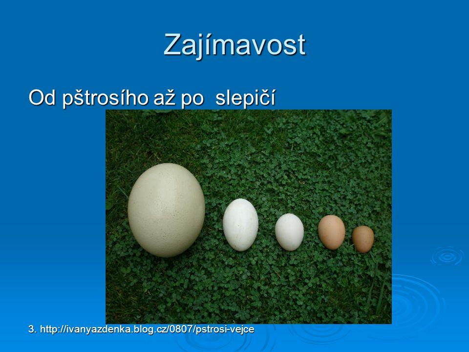 Zajímavost Od pštrosího až po slepičí 3. http://ivanyazdenka.blog.cz/0807/pstrosi-vejce