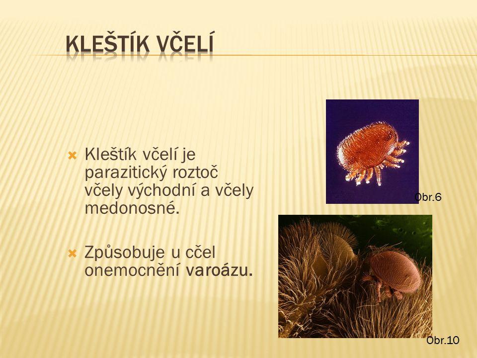  Kleštík včelí je parazitický roztoč včely východní a včely medonosné.