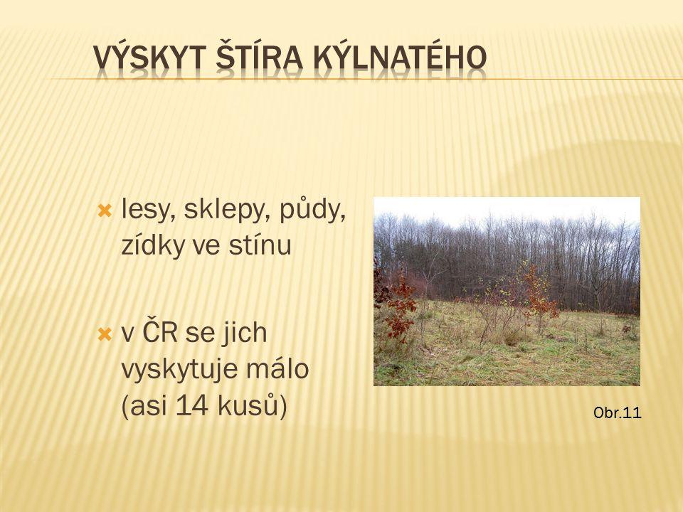  lesy, sklepy, půdy, zídky ve stínu  v ČR se jich vyskytuje málo (asi 14 kusů) Obr.11