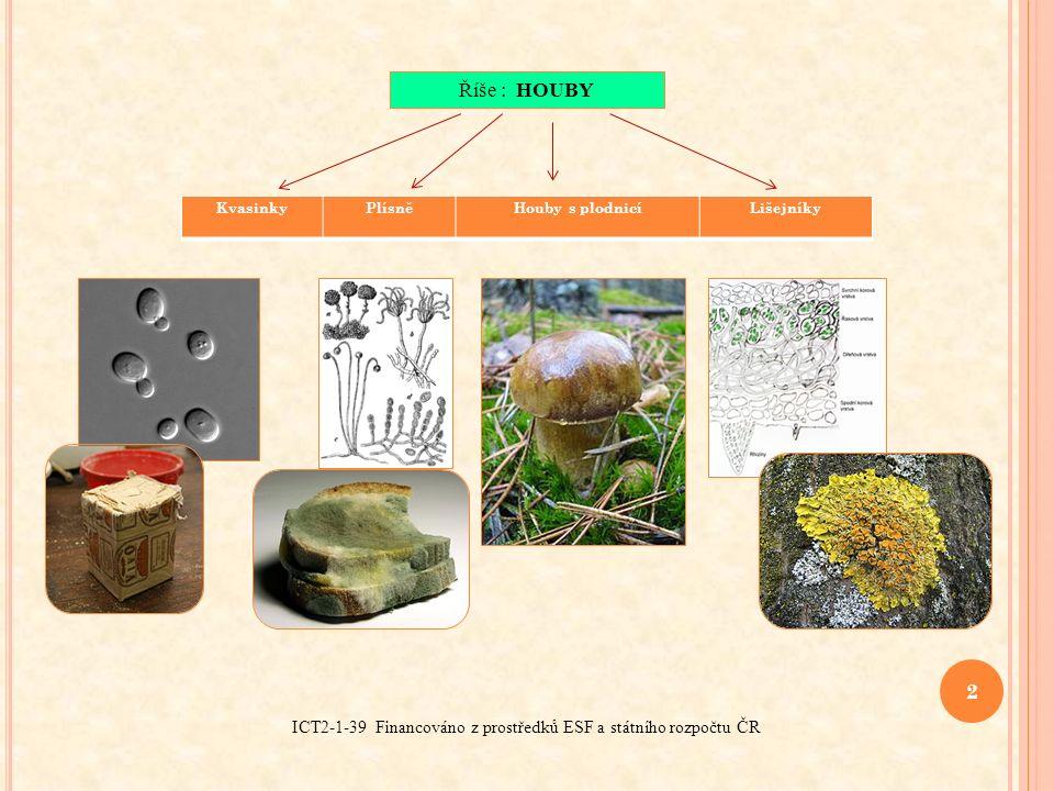 3 ICT2-1-39 Financováno z prostředků ESF a státního rozpočtu ČR HLAVNÍ ZNAKY HUB  podobné buňkám rostlin  buňky hub neobsahují chlorofyl (zelené barvivo v rostlinné buňce)  nemají schopnost fotosyntézy  většina hub – ROZKLADAČI (rozklad odumřelých těl rostlina živočichů)  parazitické houby (napadají živé organismy, způsobují houbové choroby u rostlin nebo u živočichů, včetně člověka – kožní onemocnění)  symbiotické, ve vzájemně výhodném soužití s kořeny stromů (mykorhiza), houba pomáhá rostlině přijímat vodu a ta si od ní bere organické látky, vyrobené rostlinou při fotosyntéze