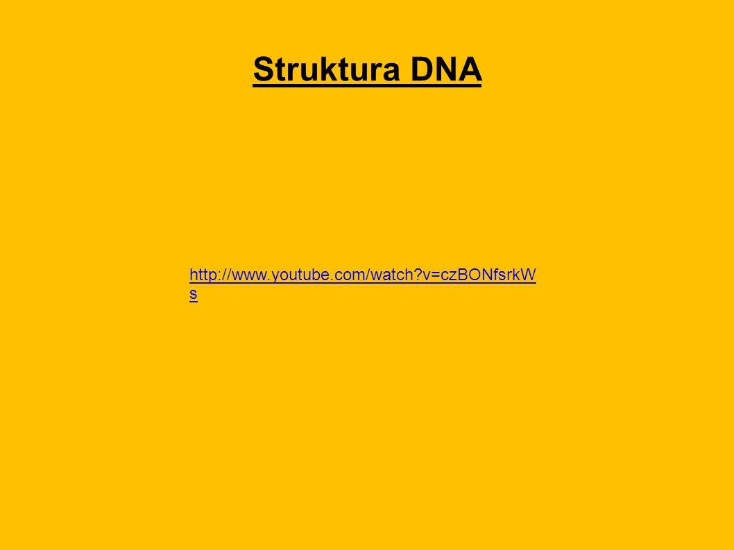 Struktura DNA http://www.youtube.com/watch v=czBONfsrkW s