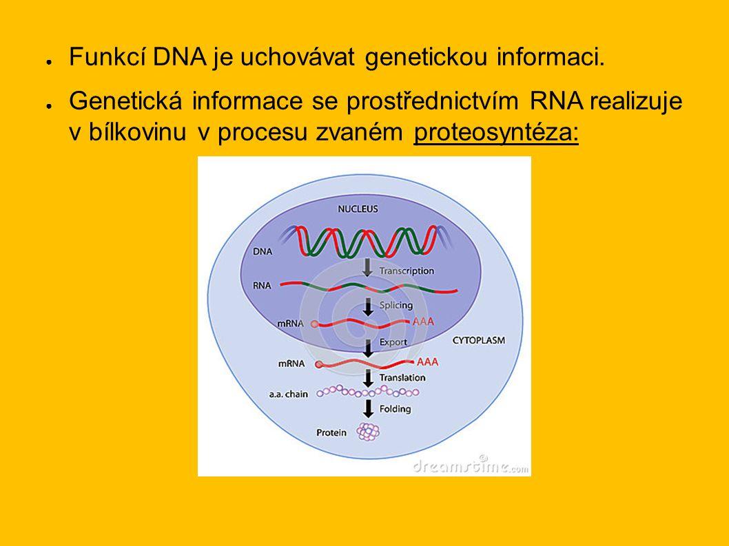 ● Funkcí DNA je uchovávat genetickou informaci.