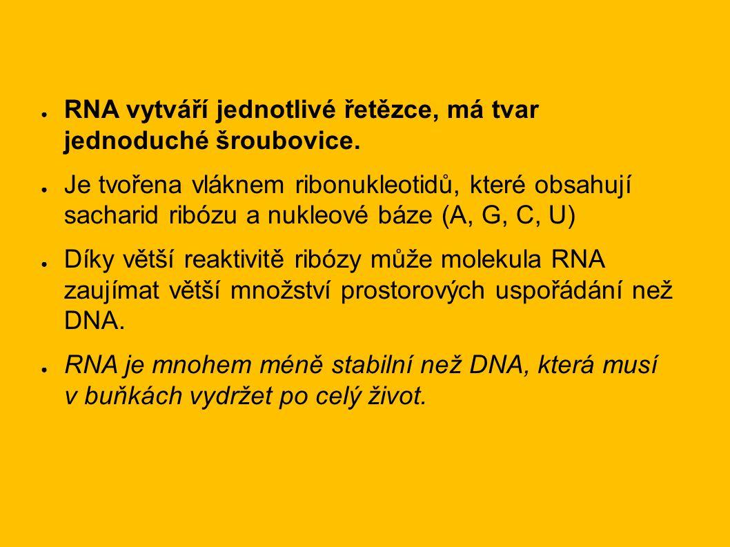 ● RNA vytváří jednotlivé řetězce, má tvar jednoduché šroubovice.