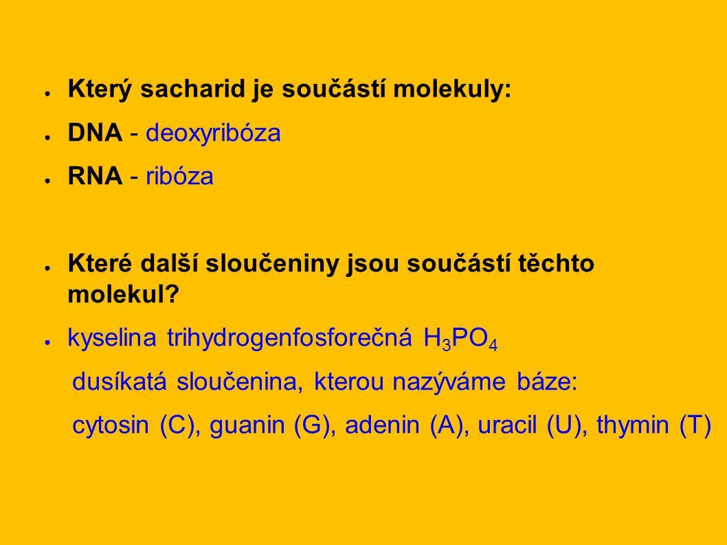 ● Který sacharid je součástí molekuly: ● DNA - deoxyribóza ● RNA - ribóza ● Které další sloučeniny jsou součástí těchto molekul.