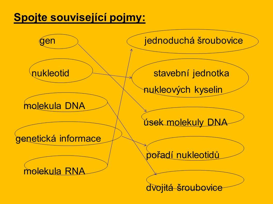 Spojte související pojmy: gen jednoduchá šroubovice nukleotid stavební jednotka nukleových kyselin molekula DNA úsek molekuly DNA genetická informace pořadí nukleotidů molekula RNA dvojitá šroubovice