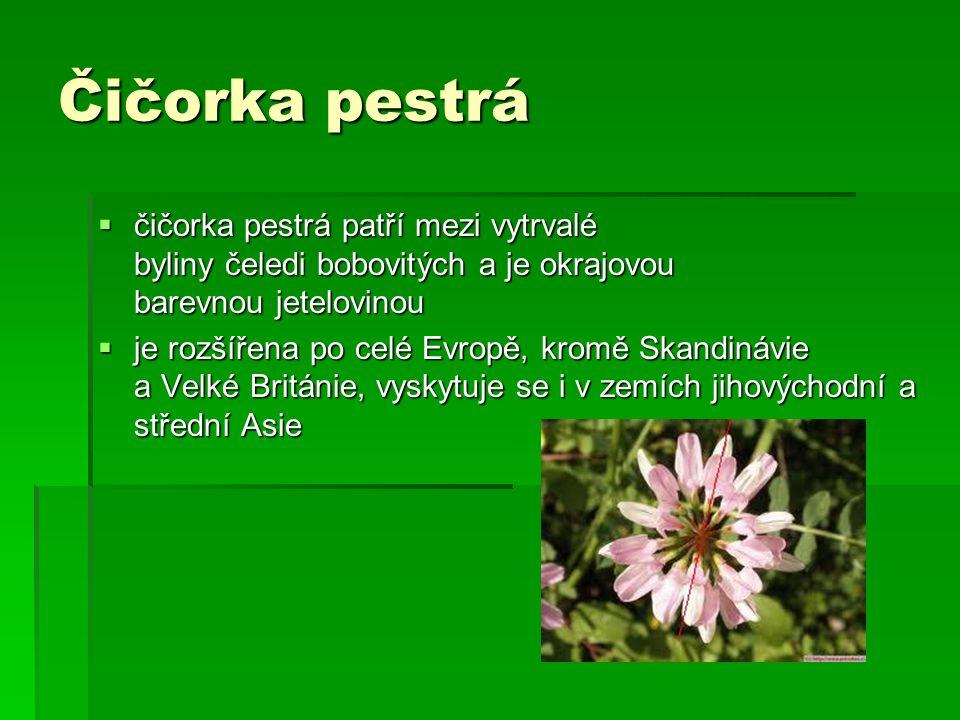 Čičorka pestrá  čičorka pestrá patří mezi vytrvalé byliny čeledi bobovitých a je okrajovou barevnou jetelovinou  je rozšířena po celé Evropě, kromě Skandinávie a Velké Británie, vyskytuje se i v zemích jihovýchodní a střední Asie