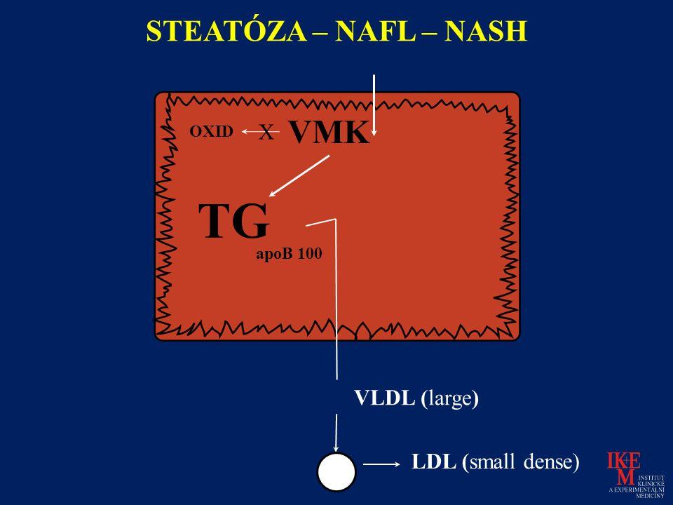 LDL (small dense) STEATÓZA – NAFL – NASH OXID TG VLDL (large) VMK X apoB 100