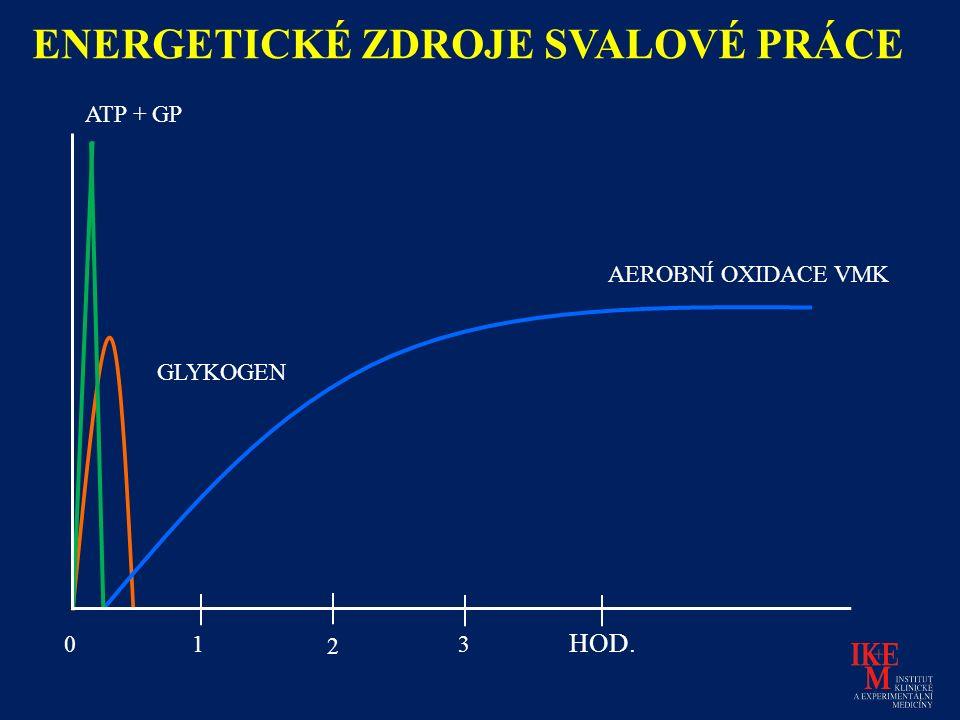 AEROBNÍ OXIDACE VMK GLYKOGEN ATP + GP 01 2 3 HOD. ENERGETICKÉ ZDROJE SVALOVÉ PRÁCE