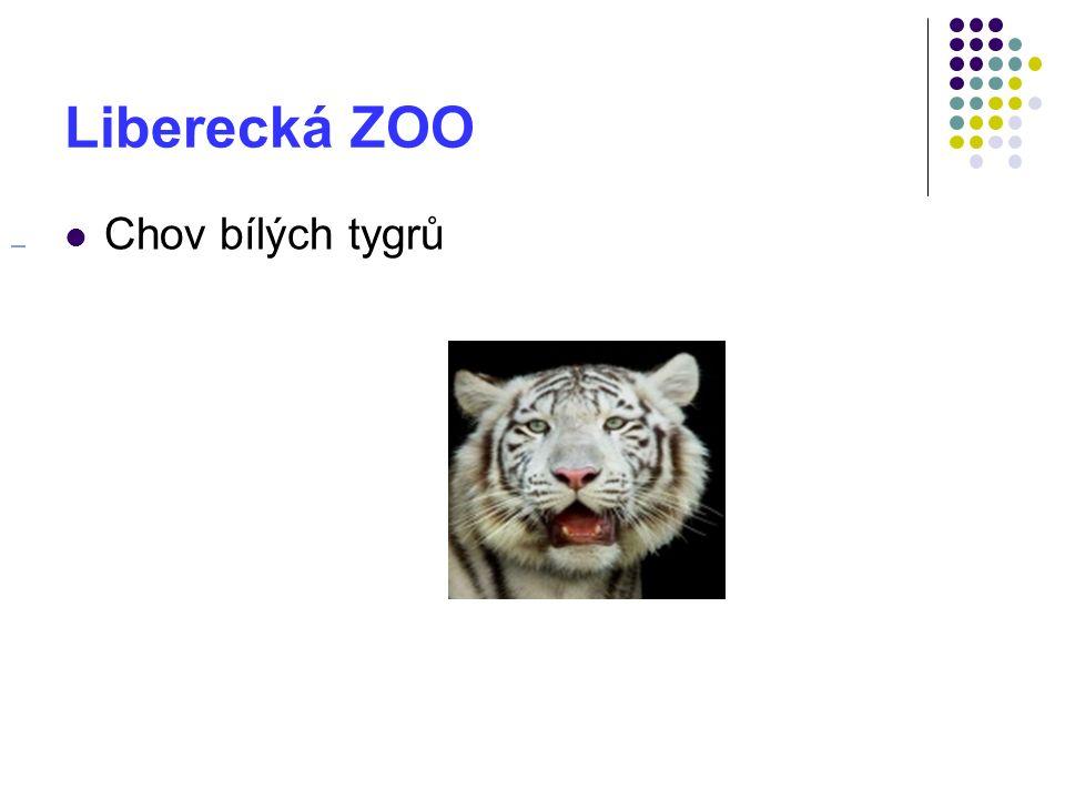 Liberecká ZOO Chov bílých tygrů