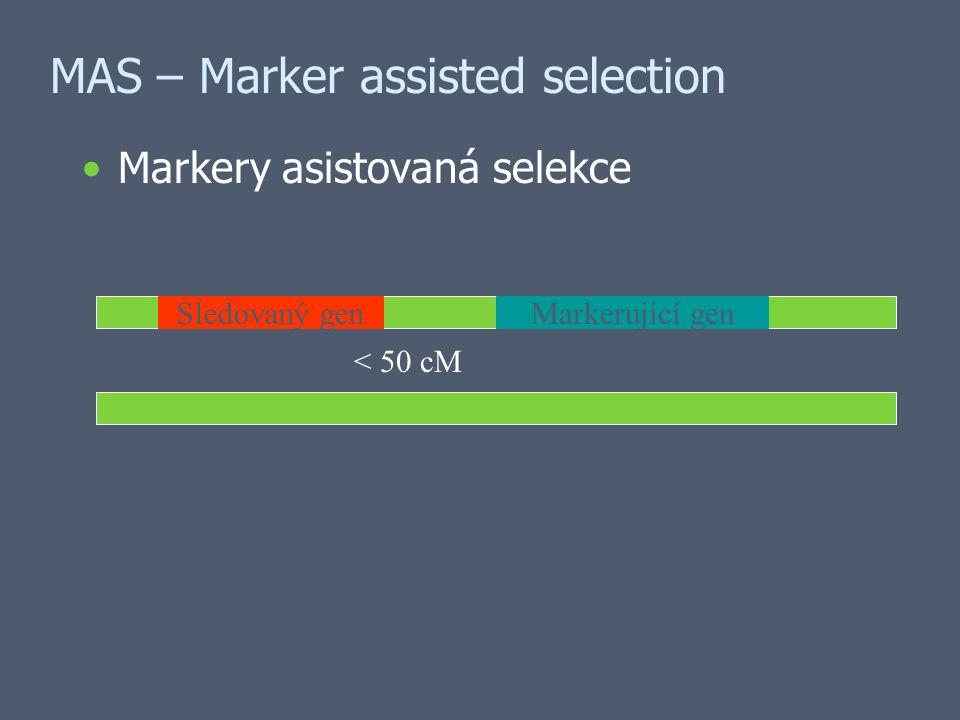 MAS – Marker assisted selection Markery asistovaná selekce Sledovaný genMarkerující gen < 50 cM
