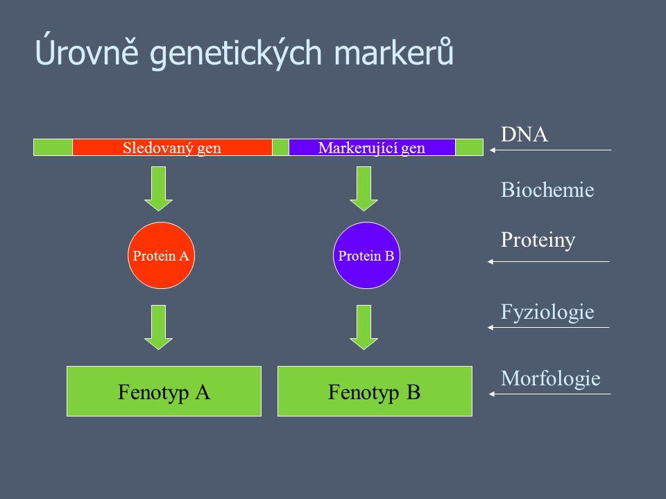 Úrovně genetických markerů Sledovaný genMarkerující gen Protein AProtein B Fenotyp AFenotyp B Morfologie Fyziologie Proteiny DNA Biochemie