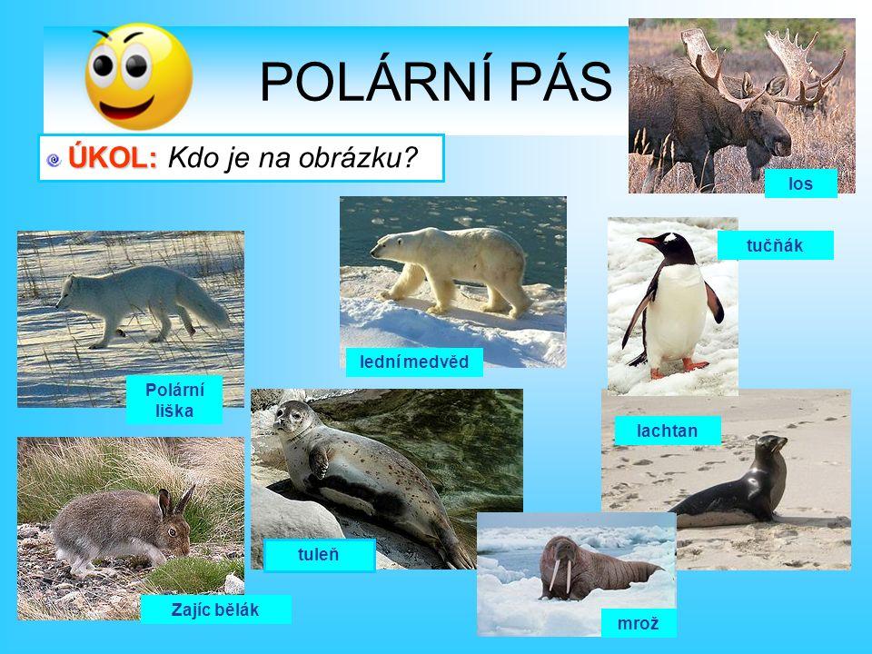 tuleň tučňák Polární liška Zajíc bělák lachtan mrož los lední medvěd Ú ÚÚ ÚKOL: Kdo je na obrázku?