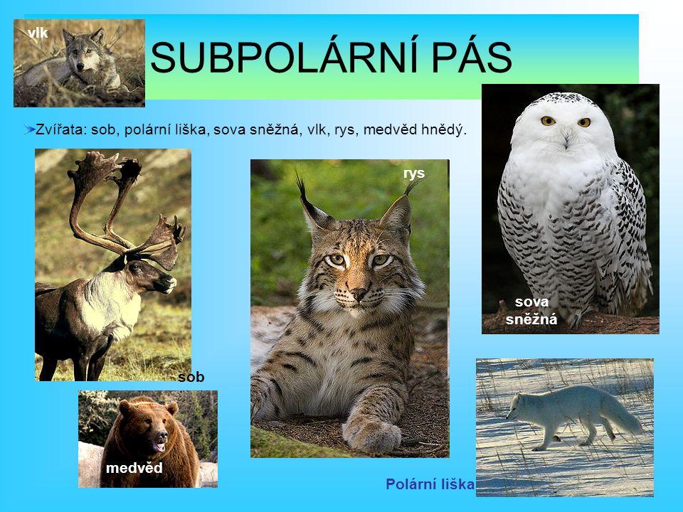 Zvířata: sob, polární liška, sova sněžná, vlk, rys, medvěd hnědý.