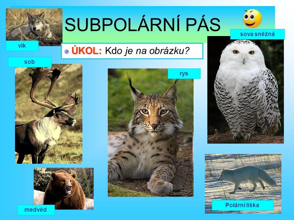 sob vlk rys sova sněžná medvěd Polární liška Ú ÚÚ ÚKOL: Kdo je na obrázku?