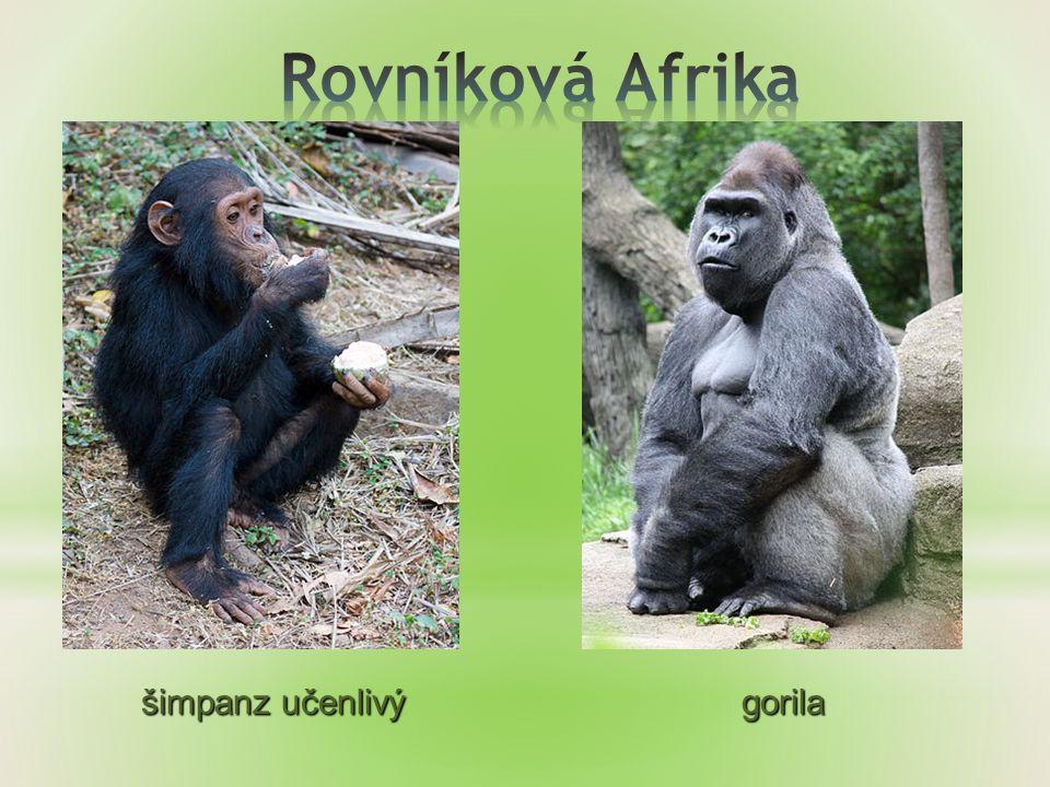 - makak - tygr - orangutan