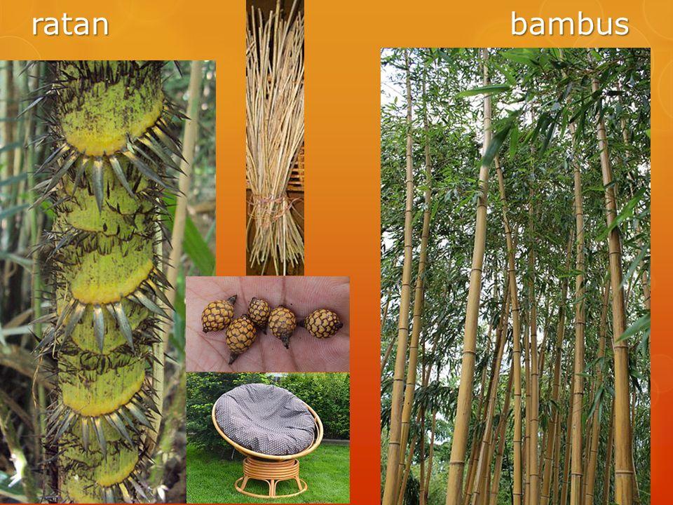 ratan bambus ratan bambus