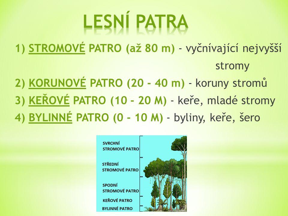 1) STROMOVÉ PATRO (až 80 m) - vyčnívající nejvyšší stromy 2) KORUNOVÉ PATRO (20 - 40 m) - koruny stromů 3) KEŘOVÉ PATRO (10 - 20 M) - keře, mladé stromy 4) BYLINNÉ PATRO (0 - 10 M) - byliny, keře, šero