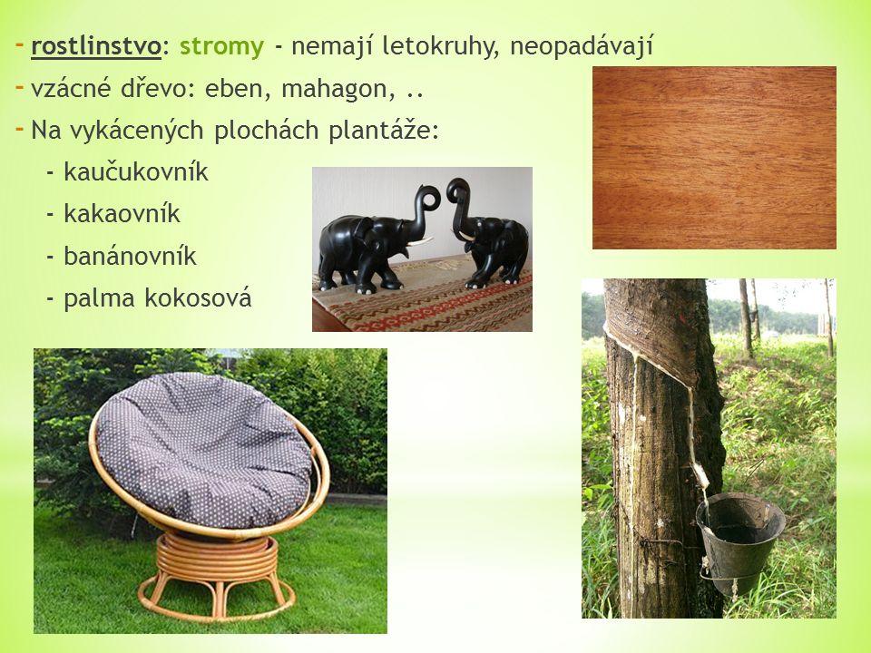 - rostlinstvo: stromy - nemají letokruhy, neopadávají - vzácné dřevo: eben, mahagon,..