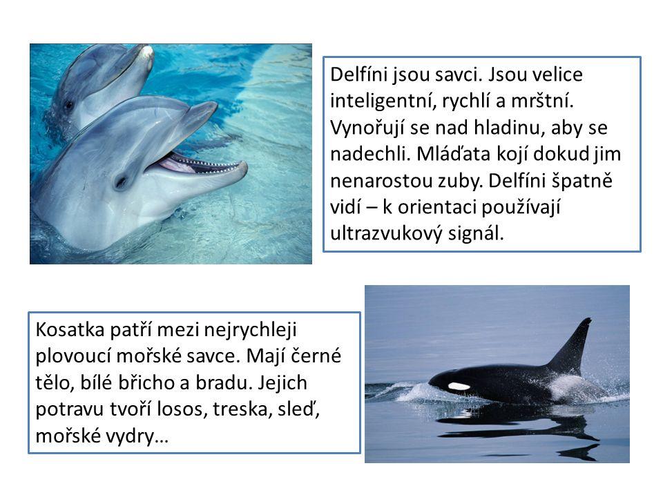 Kosatka patří mezi nejrychleji plovoucí mořské savce. Mají černé tělo, bílé břicho a bradu. Jejich potravu tvoří losos, treska, sleď, mořské vydry… De