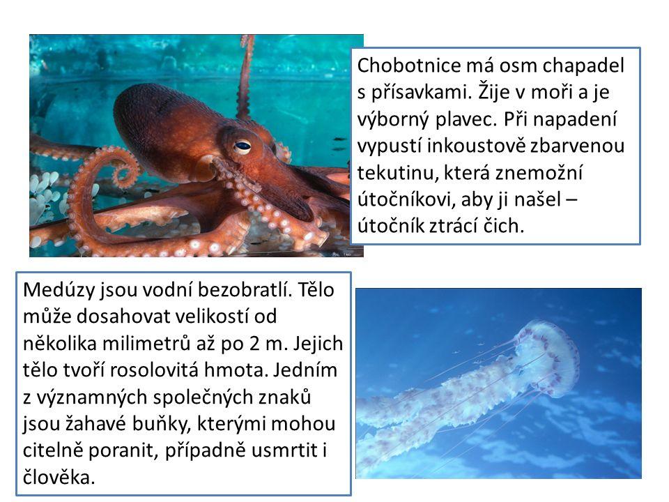 Chobotnice má osm chapadel s přísavkami. Žije v moři a je výborný plavec. Při napadení vypustí inkoustově zbarvenou tekutinu, která znemožní útočníkov