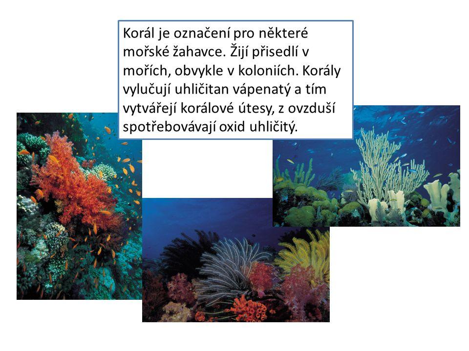 Korál je označení pro některé mořské žahavce. Žijí přisedlí v mořích, obvykle v koloniích. Korály vylučují uhličitan vápenatý a tím vytvářejí korálové