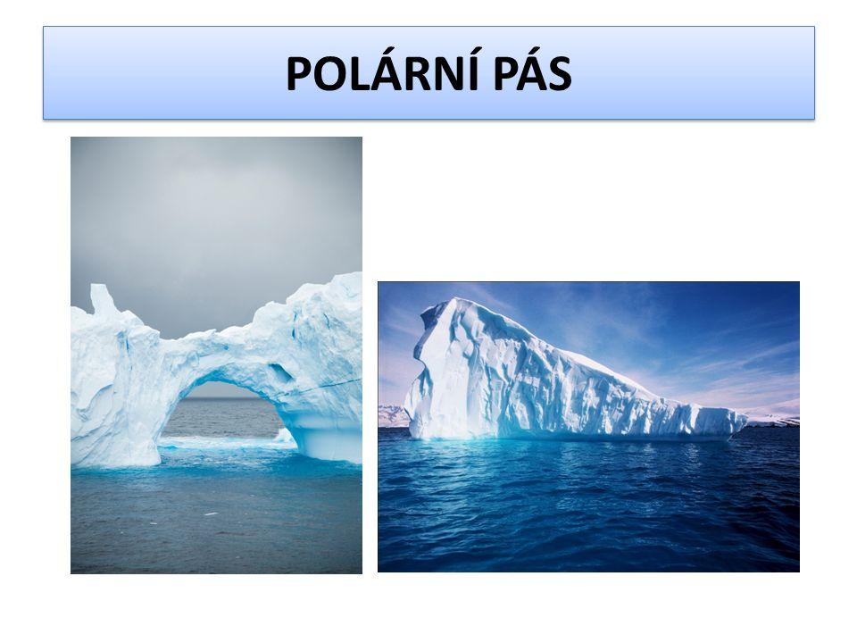CHARKTERISTIKA OBLASTI  velmi krátké léto  dlouhá polární noc  po většinu roku zaledněné, sníh taje jen za krátkého polárního léta kdy slunce svítí celých 24h  polární noc trvá půl roku  severní polární pás = Arktida  jižní polární pás = Antarktida  rostlinné společenstvo Arktidy se nazývá tundra