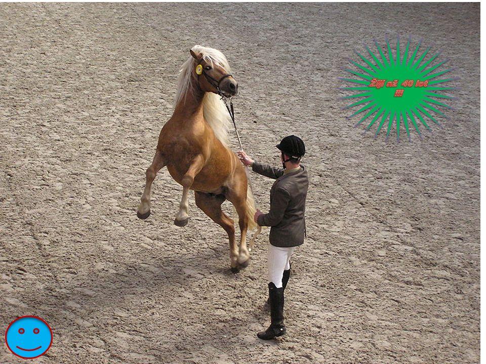 Fríský k ůň Fríští koně jsou dnes pouze vraníci.Jsou povoleny jednotlivé bílé chlupy, (např.