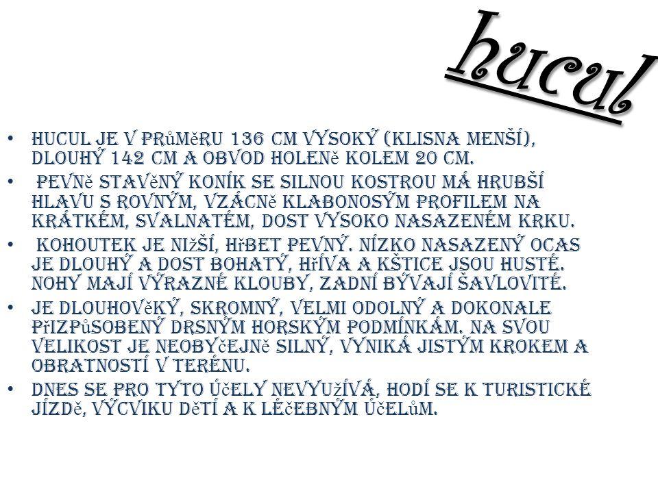 hucul Hucul je v pr ů m ě ru 136 cm vysoký (klisna menší), dlouhý 142 cm a obvod holen ě kolem 20 cm.