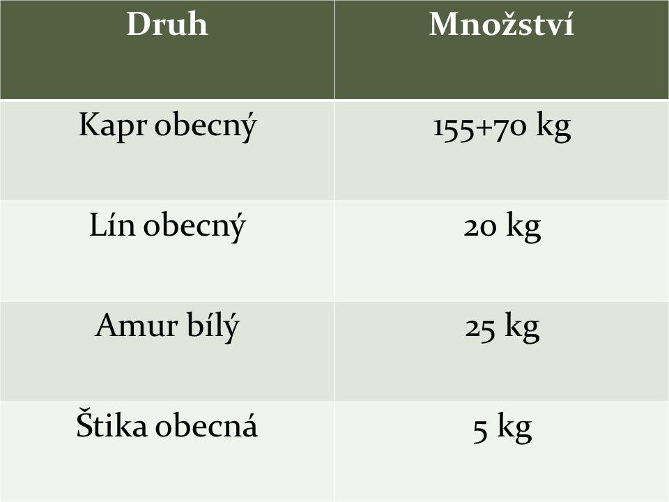 DruhMnožství Kapr obecný155+70 kg Lín obecný20 kg Amur bílý25 kg Štika obecná5 kg