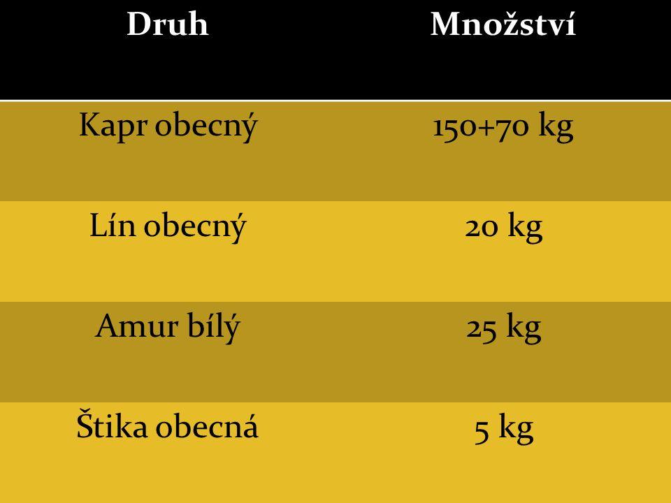 DruhMnožství Kapr obecný150+70 kg Lín obecný20 kg Amur bílý25 kg Štika obecná5 kg