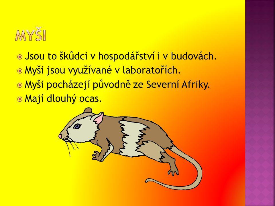  Jsou to škůdci v hospodářství i v budovách.  Myši jsou využívané v laboratořích.  Myši pocházejí původně ze Severní Afriky.  Mají dlouhý ocas.
