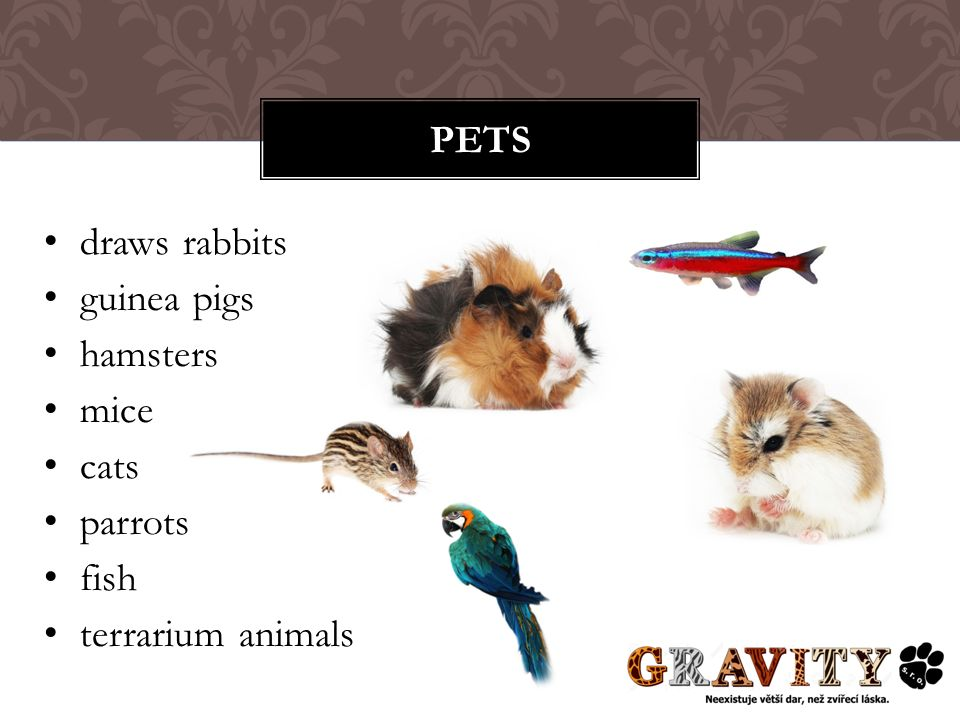 draws rabbits guinea pigs hamsters mice cats parrots fish terrarium animals PETS