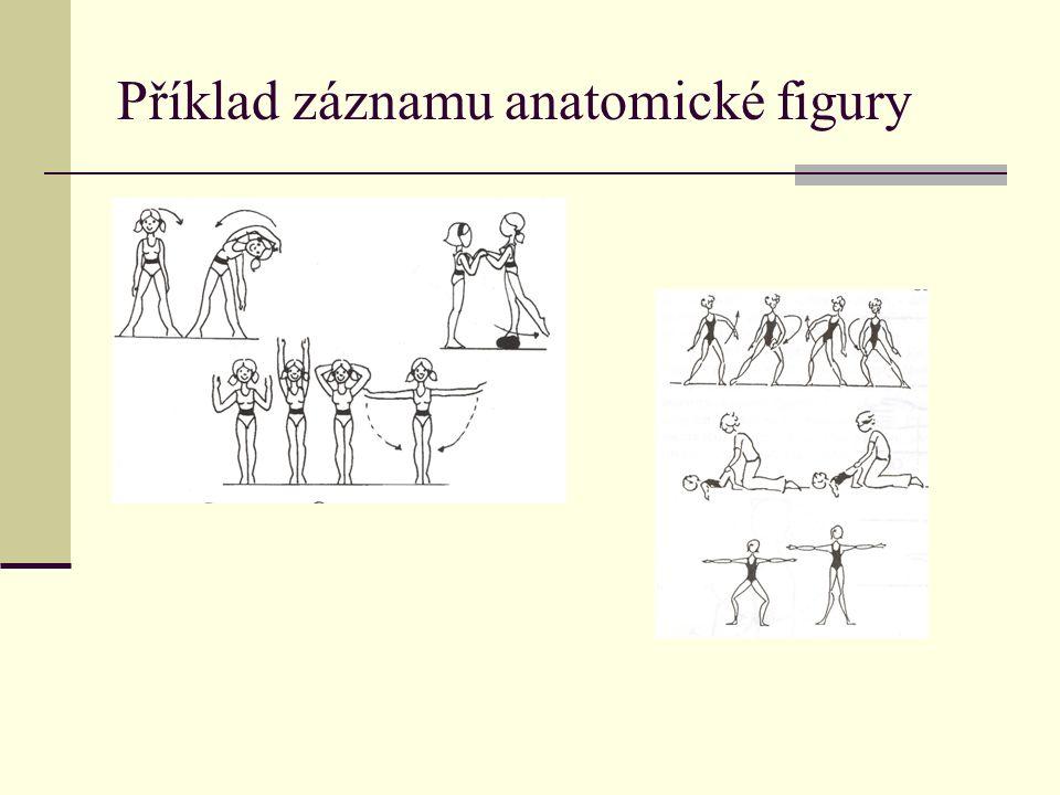 Příklad záznamu anatomické figury