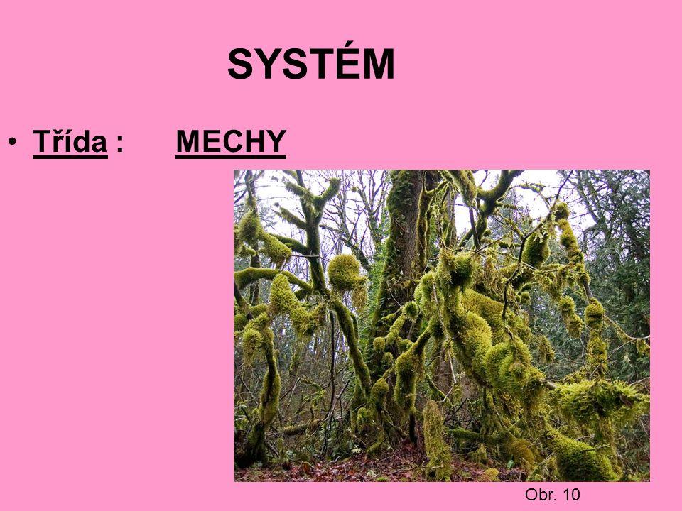 SYSTÉM Třída : MECHY Obr. 10