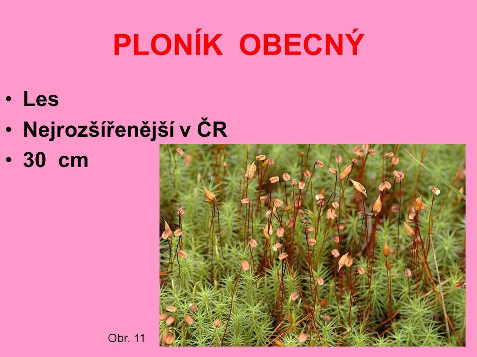 PLONÍK OBECNÝ Les Nejrozšířenější v ČR 30 cm Obr. 11