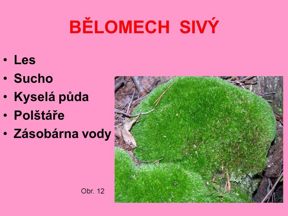 BĚLOMECH SIVÝ Les Sucho Kyselá půda Polštáře Zásobárna vody Obr. 12