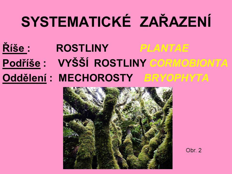 SYSTEMATICKÉ ZAŘAZENÍ Říše : ROSTLINY PLANTAE Podříše : VYŠŠÍ ROSTLINY CORMOBIONTA Oddělení : MECHOROSTY BRYOPHYTA Obr.