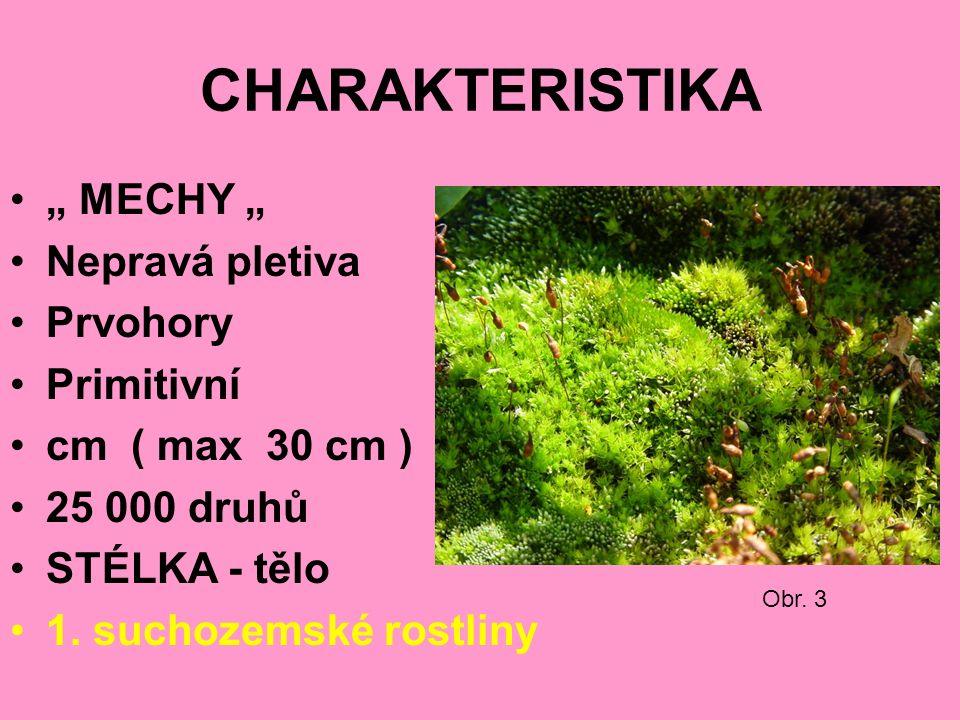 """CHARAKTERISTIKA """" MECHY """" Nepravá pletiva Prvohory Primitivní cm ( max 30 cm ) 25 000 druhů STÉLKA - tělo 1."""
