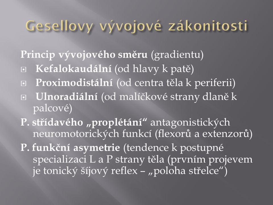 Princip vývojového směru (gradientu)  Kefalokaudální (od hlavy k patě)  Proximodistální (od centra těla k periferii)  Ulnoradiální (od malíčkové strany dlaně k palcové) P.