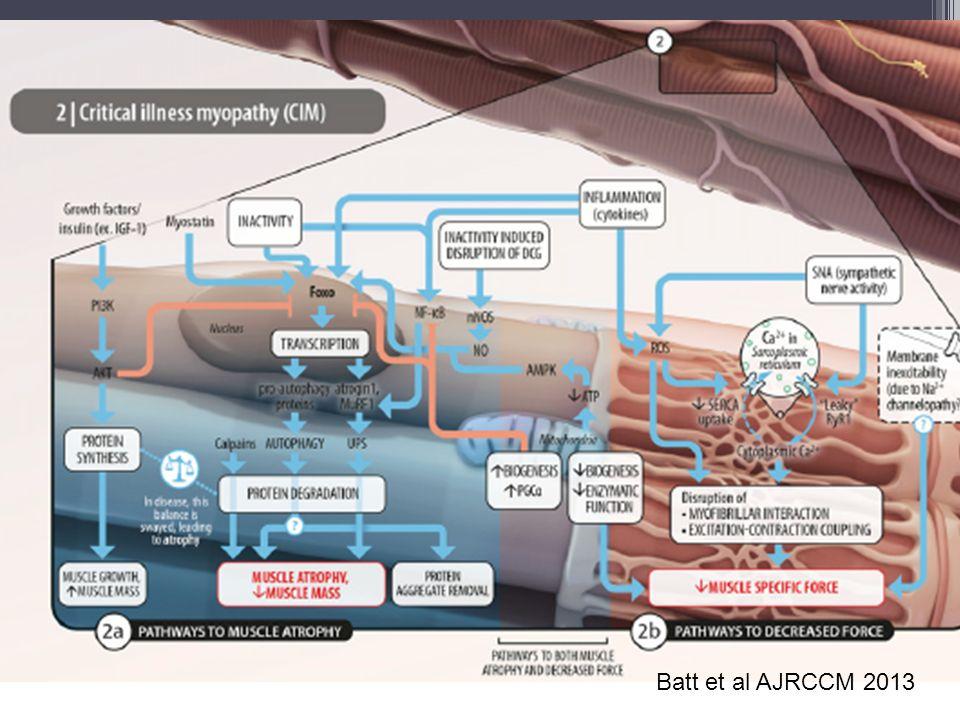 Bioenergetické selhání Akutní kritické stavy (sepse) ▫Porucha syntézy ATP, defekt komplexu I (Brealey, Lancet 2002) Kompenzatorní aktivace mitochondriální biogeneze ▫Frederiksson PlOS One 2008 ▫Predikuje přežití u MODS (Carre AJRCCM 2010) Hypotéza: Mitochondriální dysfunkce v kosterním svalu přetrvává do chronické fáze u pacientů s klinicky významnou ICUAW