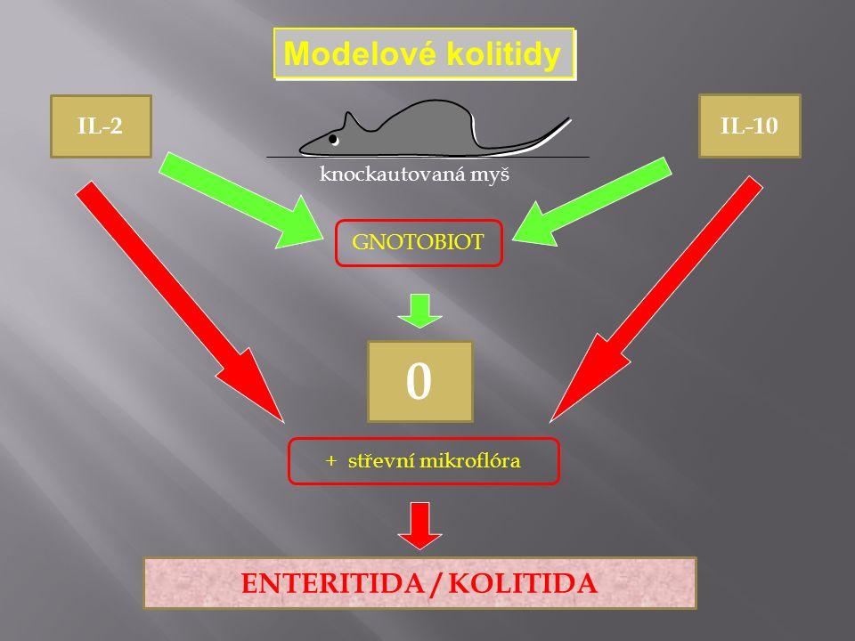 Modelové kolitidy IL-2 IL-10 knockautovaná myš GNOTOBIOT 0 + střevní mikroflóra ENTERITIDA / KOLITIDA
