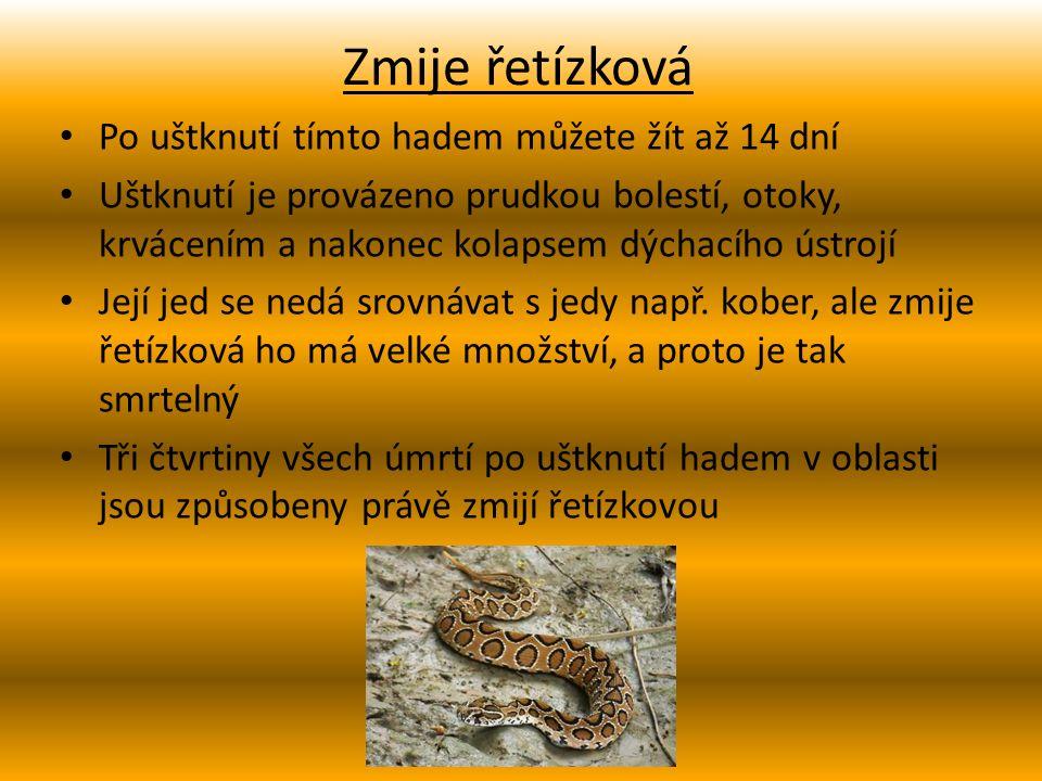 Zmije paví Dorůstá velikosti okolo 60cm Smrtelnost jejích neléčených uštknutí je asi 30% Má nejvíce smrtelných uštknutí ze všech hadů na světě Nebezpečnost zmije paví spočívá v hojném výskytu v daném místě či zalidněné oblasti Ročně zabije několik tisíc lidí
