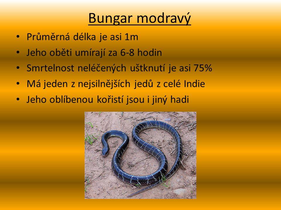 Bungar modravý Průměrná délka je asi 1m Jeho oběti umírají za 6-8 hodin Smrtelnost neléčených uštknutí je asi 75% Má jeden z nejsilnějších jedů z celé Indie Jeho oblíbenou kořistí jsou i jiný hadi