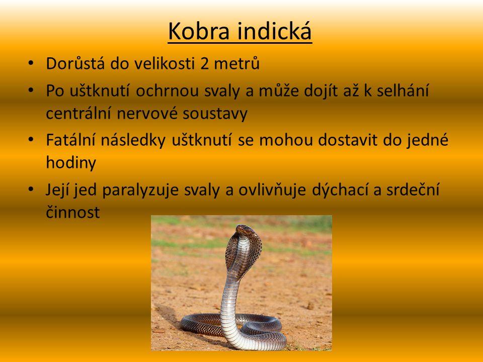 Kobra indická Dorůstá do velikosti 2 metrů Po uštknutí ochrnou svaly a může dojít až k selhání centrální nervové soustavy Fatální následky uštknutí se mohou dostavit do jedné hodiny Její jed paralyzuje svaly a ovlivňuje dýchací a srdeční činnost