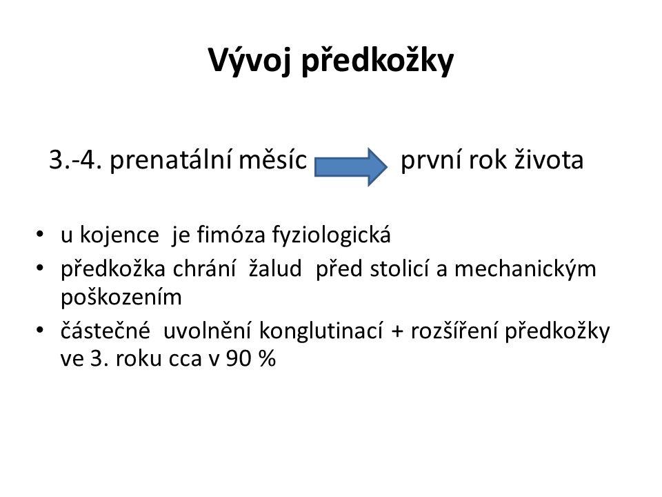 Vývoj předkožky 3.-4. prenatální měsíc první rok života u kojence je fimóza fyziologická předkožka chrání žalud před stolicí a mechanickým poškozením