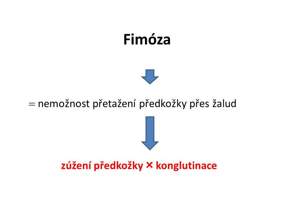 Fimóza  nemožnost přetažení předkožky přes žalud zúžení předkožky × konglutinace