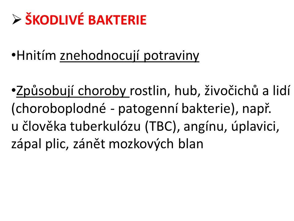  ŠKODLIVÉ BAKTERIE Hnitím znehodnocují potraviny Způsobují choroby rostlin, hub, živočichů a lidí (choroboplodné - patogenní bakterie), např. u člově