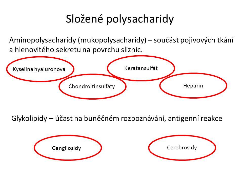 Složené polysacharidy Aminopolysacharidy (mukopolysacharidy) – součást pojivových tkání a hlenovitého sekretu na povrchu sliznic.