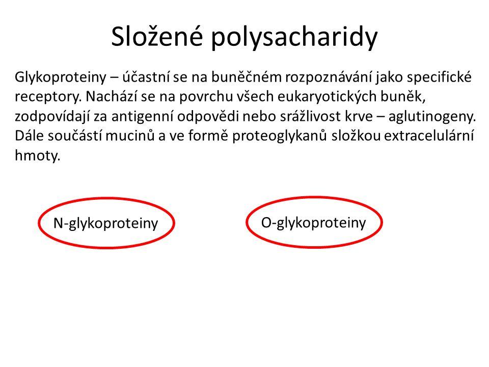 Složené polysacharidy Glykoproteiny – účastní se na buněčném rozpoznávání jako specifické receptory.