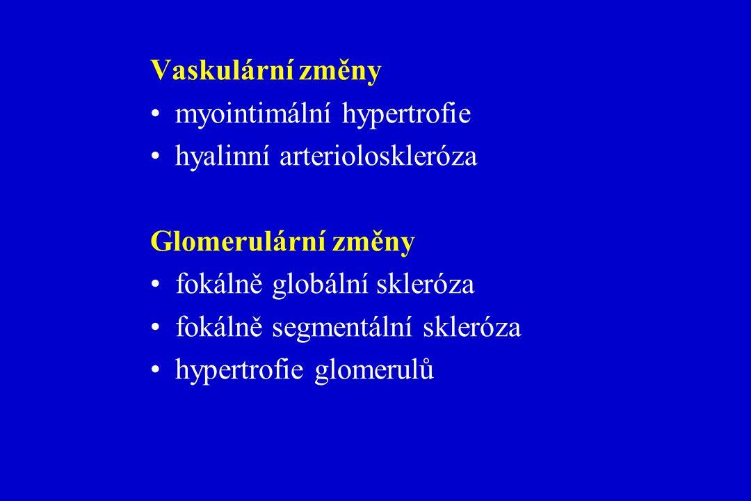 Vaskulární změny myointimální hypertrofie hyalinní arterioloskleróza Glomerulární změny fokálně globální skleróza fokálně segmentální skleróza hypertrofie glomerulů